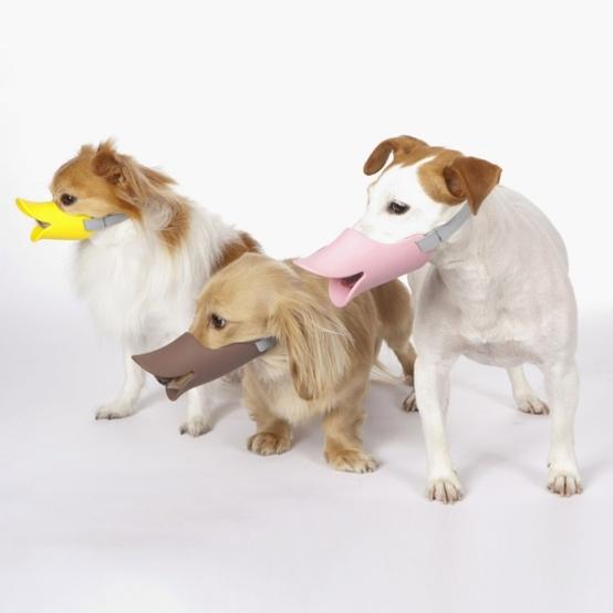 犬の散歩マナーを楽しもう!「quack」口輪でペットも人もこんなに楽しくなる♪